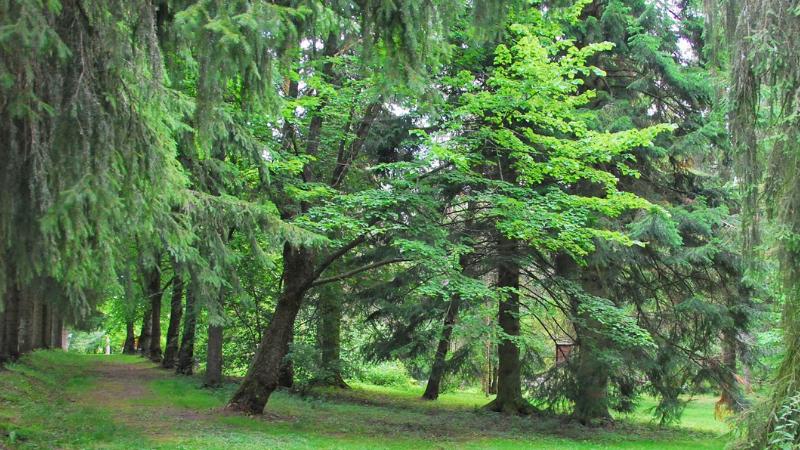 Kasvillisuutta Alakestilän Arboretumissa.