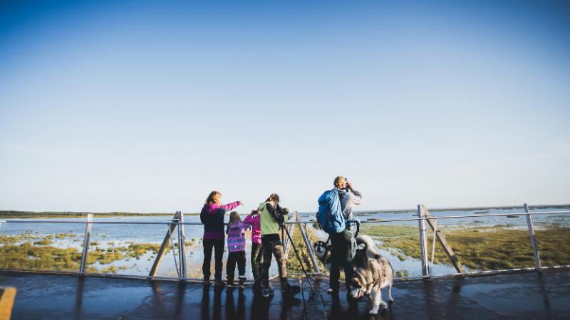 Perhe tarkkailee lintuja Virkkulan lintutornissa.