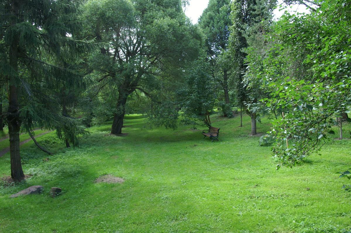 Maisema arboretumista, puita, pensaita ja penkki.