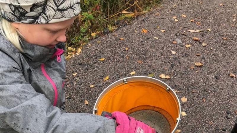 Lapsi tutkii vesieliöitä haavissa.